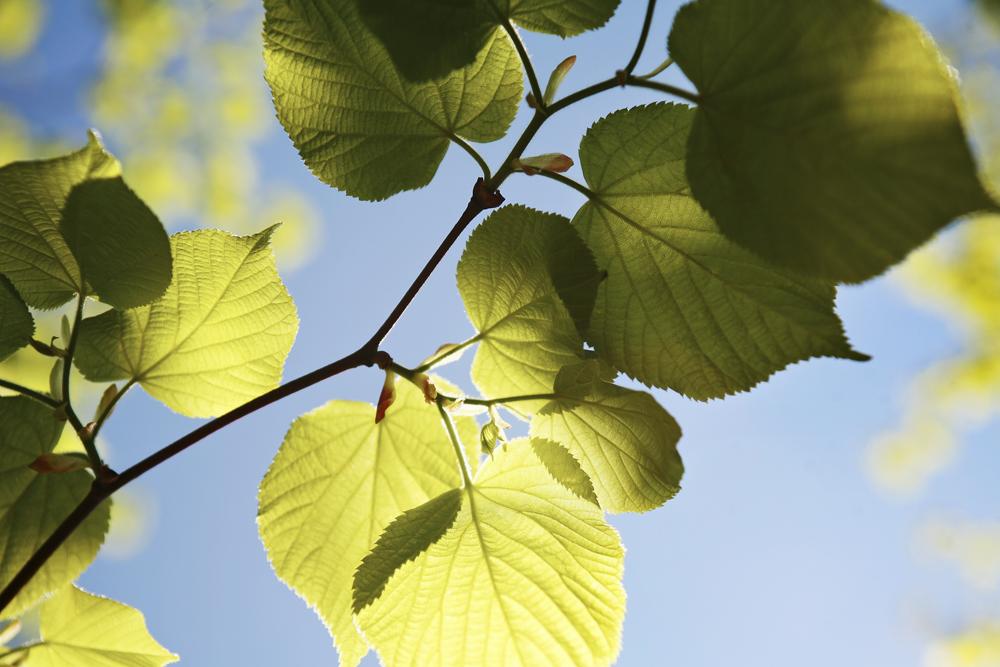 Löv i luften
