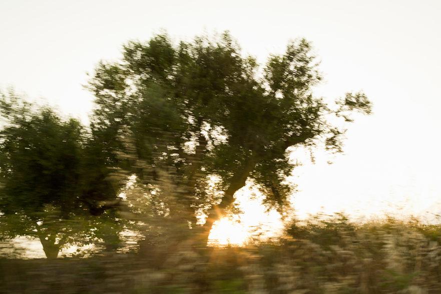 Utanför tågfönstret. Foto: Åke Nyqvistf, Folio Images